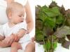 Hạ sốt cho trẻ bằng lá tía tô