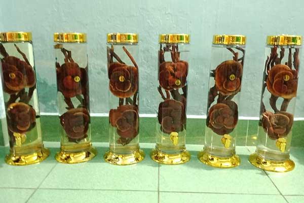 rượu nấm lim rừng